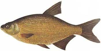 где клюет рыба в рязани сегодня