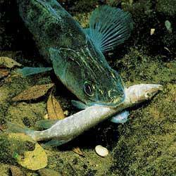 рыбалка в рязанской области видео