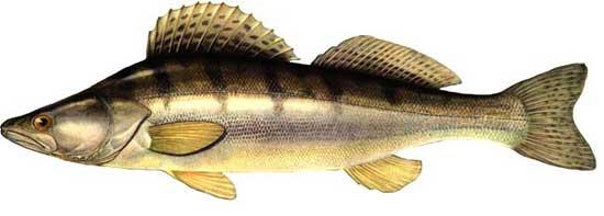 рыбалка в рязанской области на проне