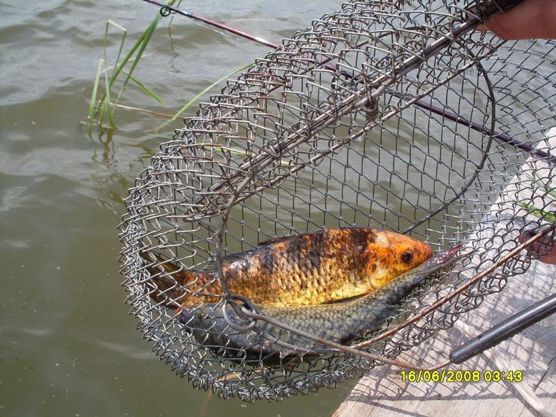 клев рыбы прогноз в г.курахово