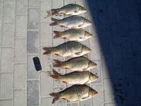 Рыбалка | ловля карпа | хороший клев | отдых за городом | рыбное хозяйство ооо Атекс | рыбалка в Днепропетровске.